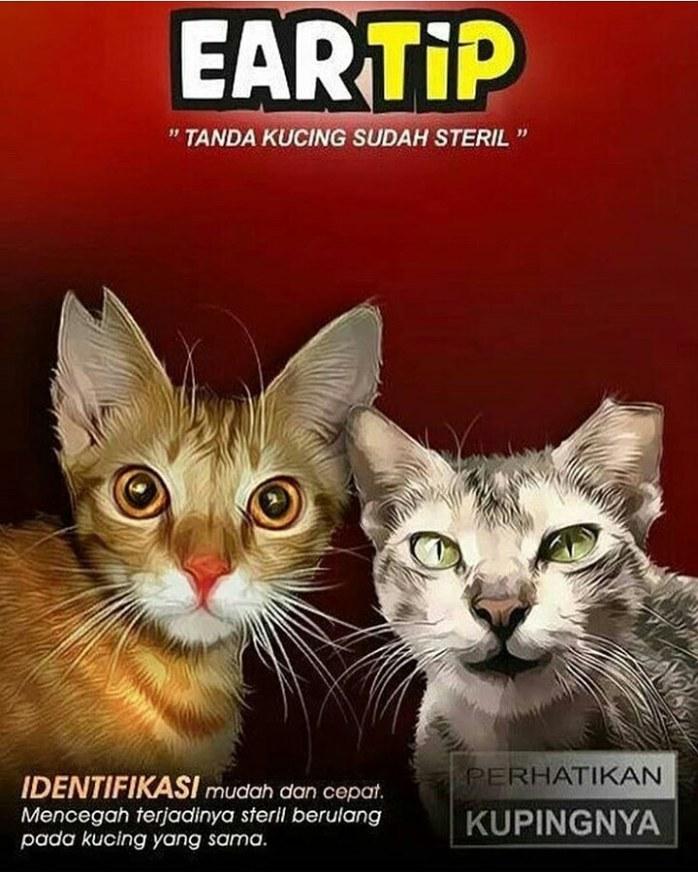 manfaat ear tip untuk kucing steril
